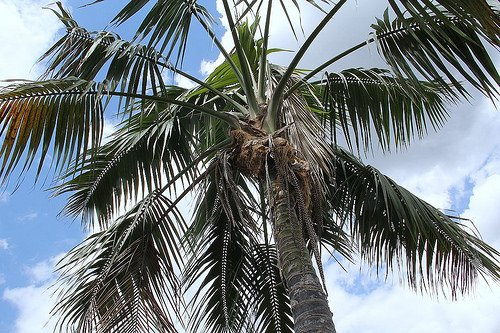 All About The Kentia Palm