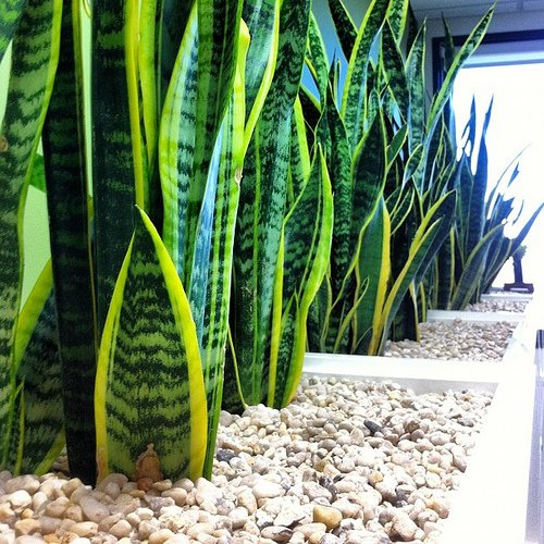 beautiful office plants